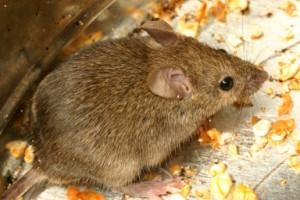 file0001062282119 300x200 Keeping Pests and Rodents at Bay