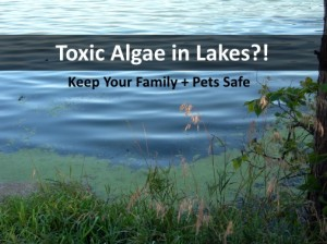 toxicalgaeinlakes 300x224 Protecting Kids and Pets from Toxic Algae in Lakes